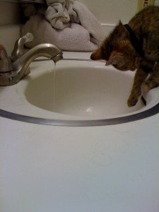 Moogle the Kitty and the Sink