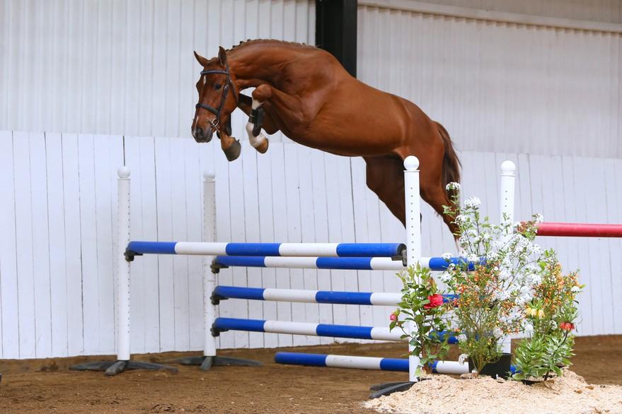 Brightwells Aintree Sport Horse Sale Presents Variant