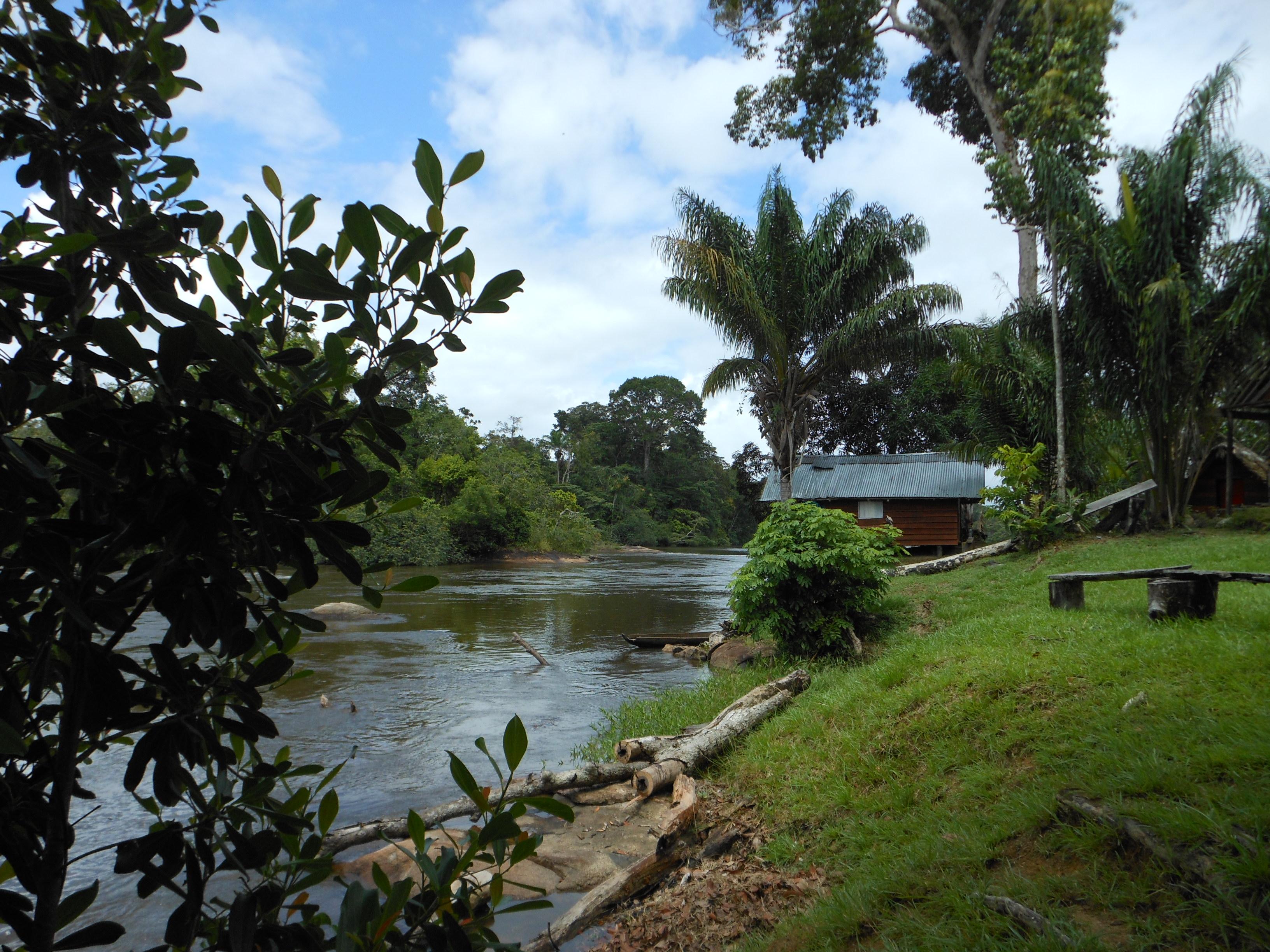 Suriname blog #7: Jungleland
