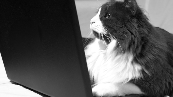 So you want to work for an animal nonprofit….