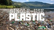 Plastic Kills 100 Million Marine Mammals Every Year—Here's What We Can Do to Help