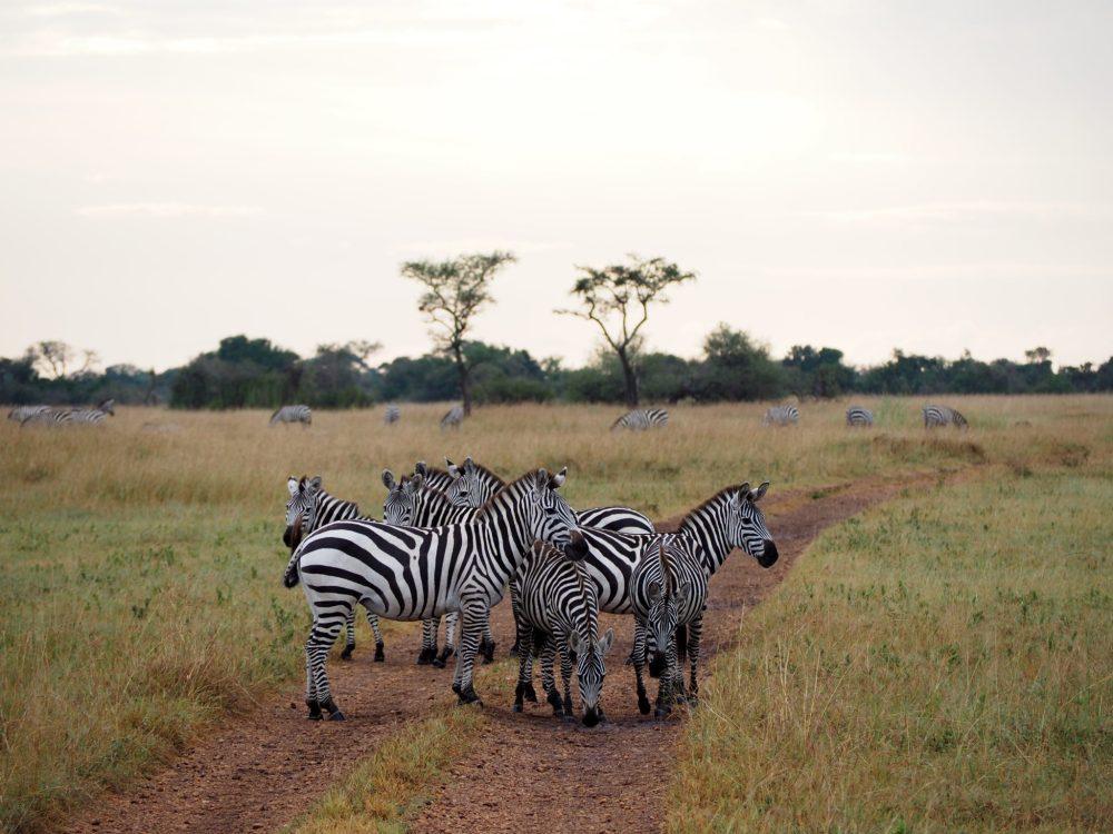 Safari in Tanzania | World of Wanderlust