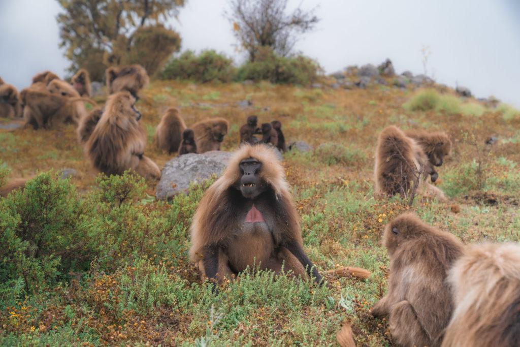 Simien Mountains Ethiopia | WORLD OF WANDERLUST
