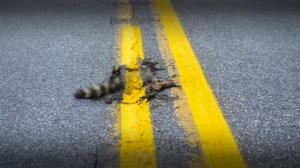 roadkill 2