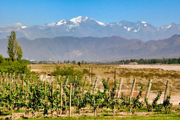 Andes Vineyards