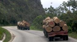 Big Trees Trucking