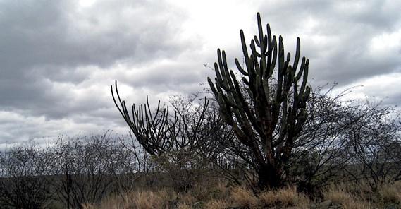 Cactus 2Canoa