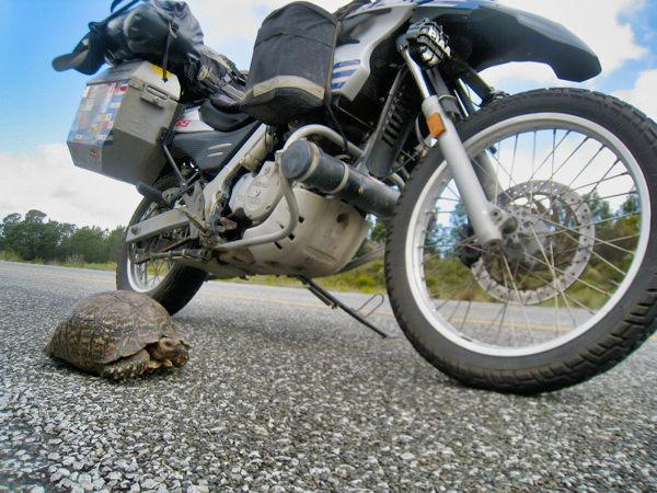 Doc Turtle