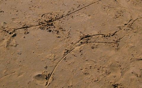 Jose Ignacio Sand Lines