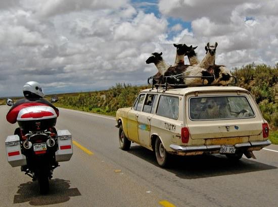 Llama Car2