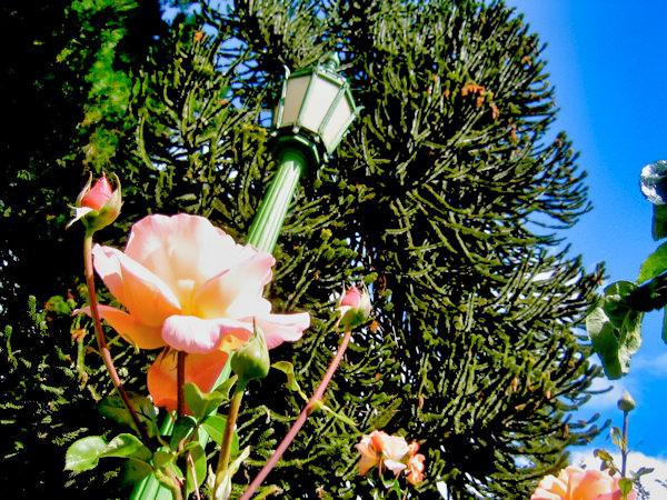 Martin Losandes Flower