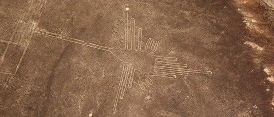 Nazca Hummingbird