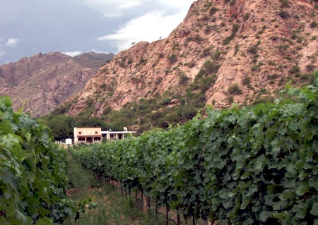 Nubes Winery Vines.Jpg