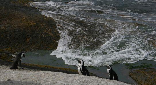 Penguins Heading Downup