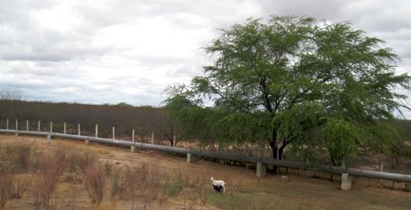 Pipeline Olinda North