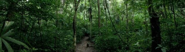 Tikal Jungle2