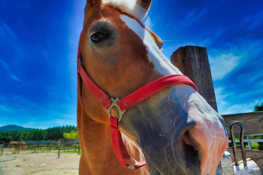 Lipizzaner Horse, Varna Bulgaria at Salla Estate Winery […] photo by WorldRider Allan Karl […]