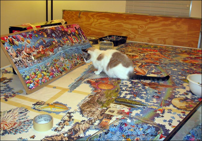 The first quadriplegic to complete The Worlds Largest Jigsaw Puzzle  Daniel Wright St