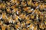 Top Live Bees Exporters by Country