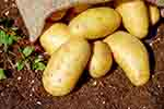Sack of potatoes (courtesy of Pixabay.com)