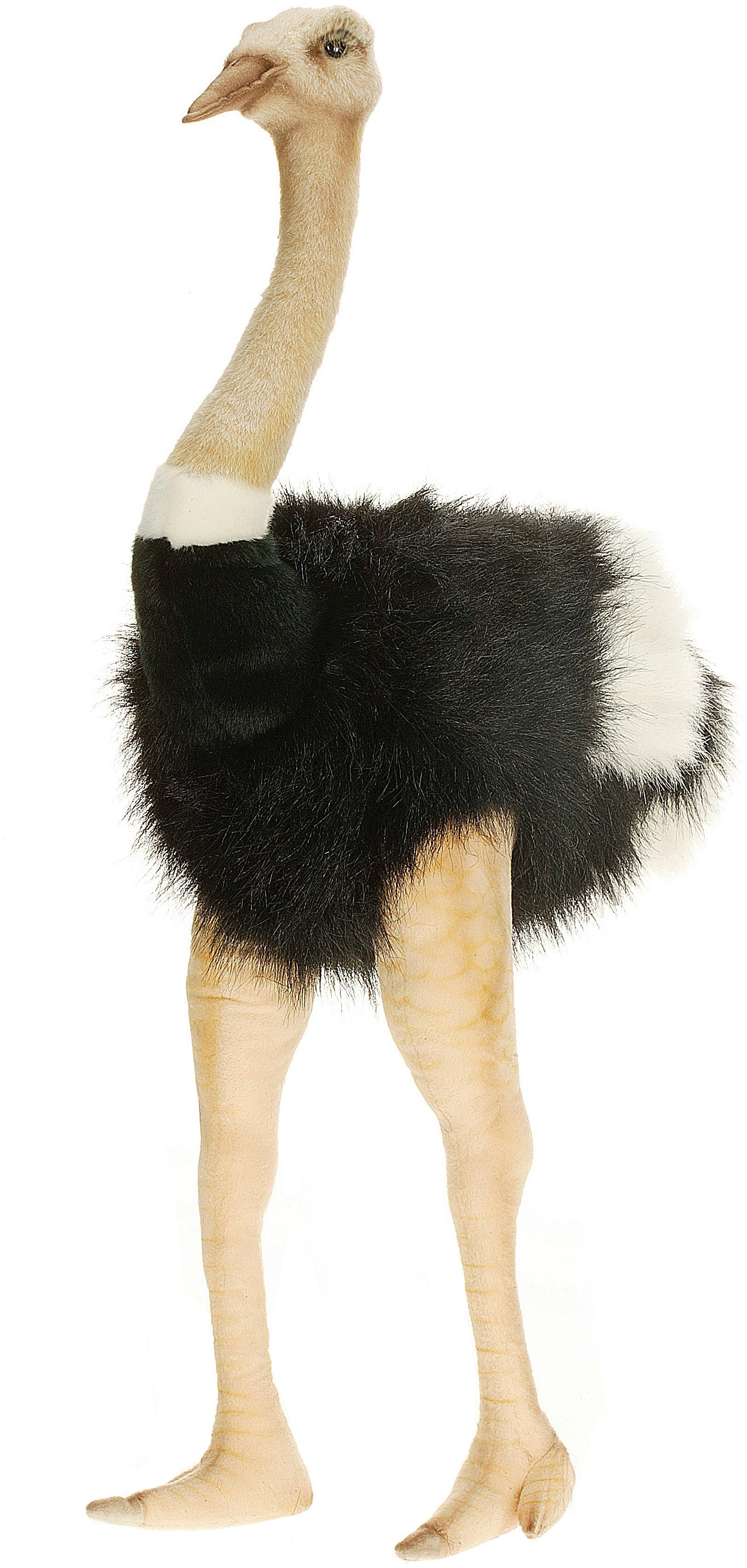 31 Male Ostrich Stuffed Animal