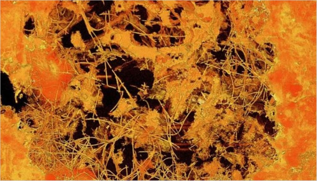 Fungi may be older than previously thought: New discovery of oldest multi-cellular life