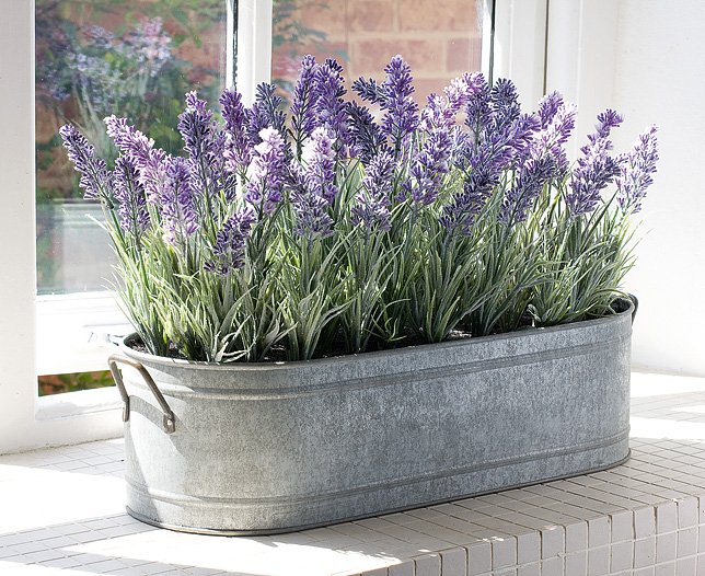 Lavender sleep-well plant