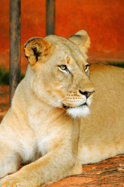 Lions Monkeys And Birds Oh My A Unique Zoo Experience In Cameroon World Travel Adventurers Luxury Travel Blog