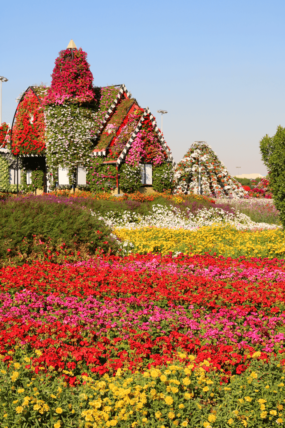 Dubai Miracle Garden 2016 A Desert Oasis Of 45 Million Flowers World Travel Adventurers