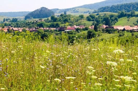 Transylvania Haferland-82
