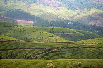 Rolling hills covered with tea plantations, Munnar , Kerala India