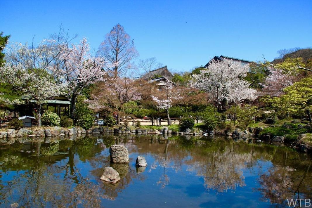 Sakura-14