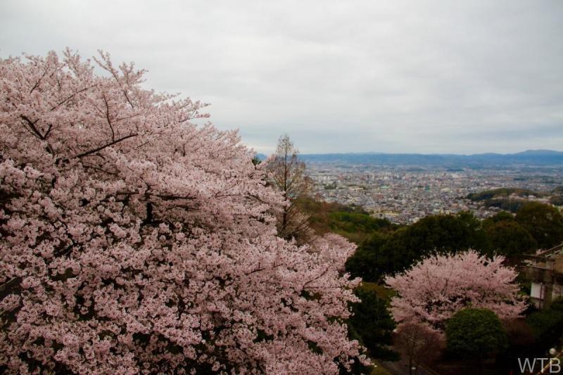 Sakura-21