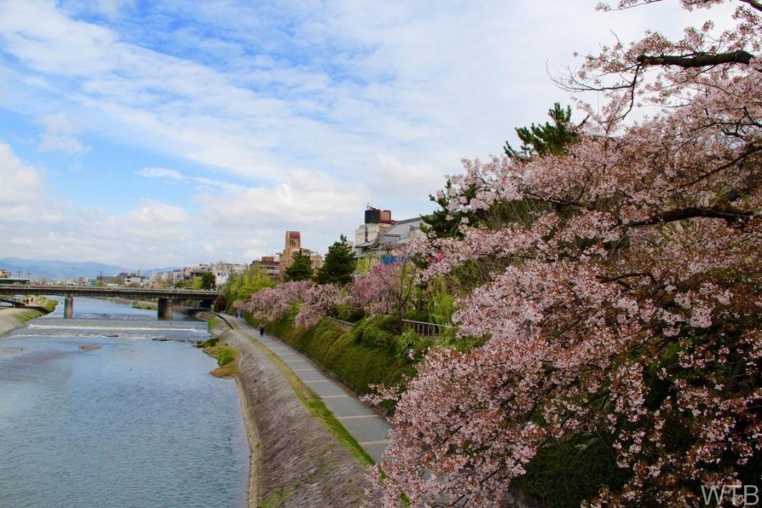 Sakura-30