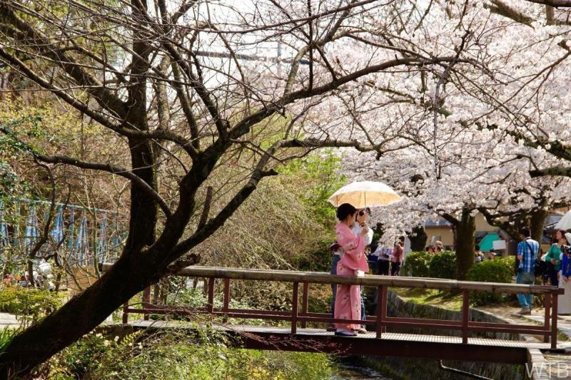 Sakura-7