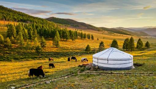 Image result for Mongolia""
