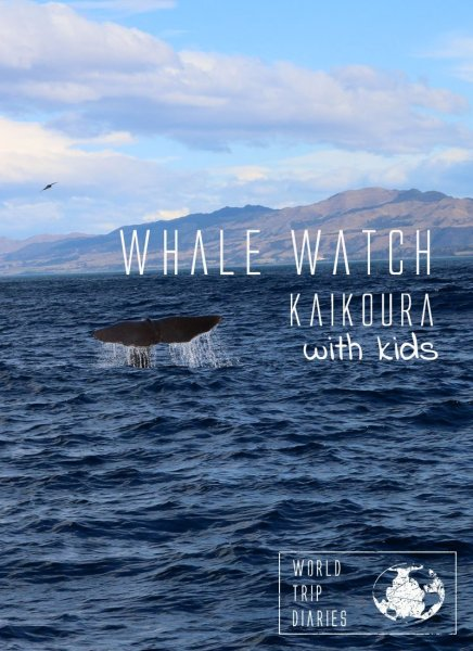 Whale watching is one of the most exciting moments in ones' life! Whale Watch Kaikoura, NZ, was a perfect family activity! Click to read more!