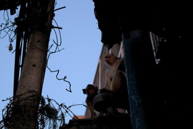 Lopburi - www.worldtrips.fr