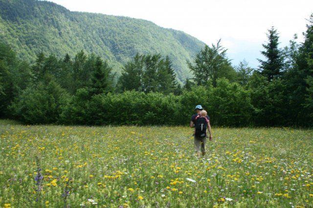 Slovenia wildflowers