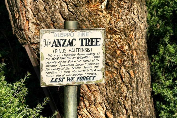 Lone Pine ANZAC Daylesford Victoria Australia