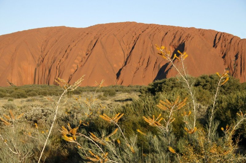 Australia wildflowers Ayers Rock Uluru