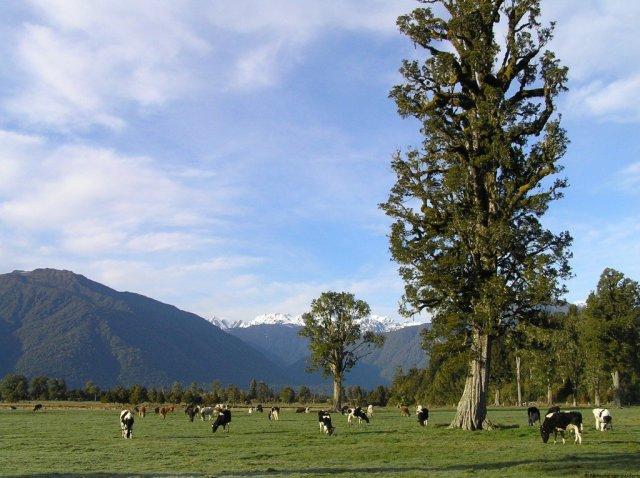 West Coast New Zealand