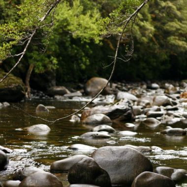 Franklin River Nature Walk, Tasmania