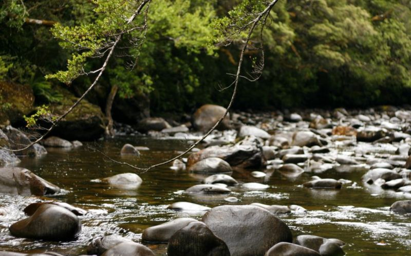 Franklin River Nature Walk, Tasmania