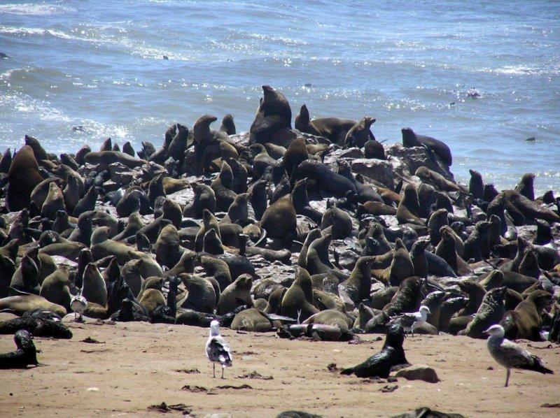 Cape Cross Seal Colony, Namibia
