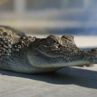 Australia: Visiting Darwin's Crocosaurus Cove