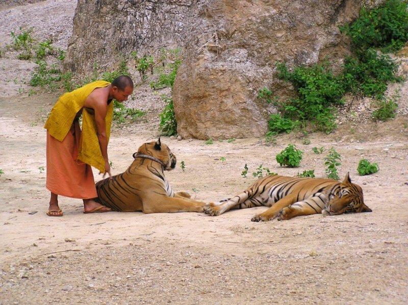 Kanchanaburi Tiger Temple, Thailand