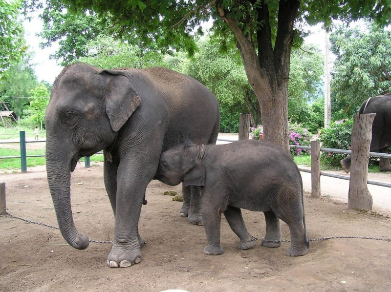 Elephants, Kanchanaburi, Thailand