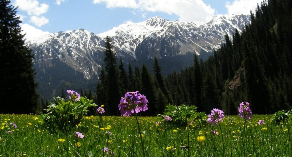 The Valley of the Flowers, Kyrgyzstan