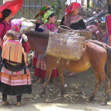 Bac-Ha-market-horse-Vietnam